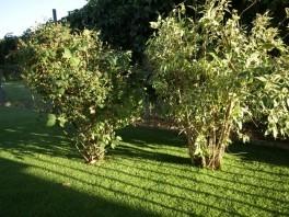 Hotový umelý trávnik